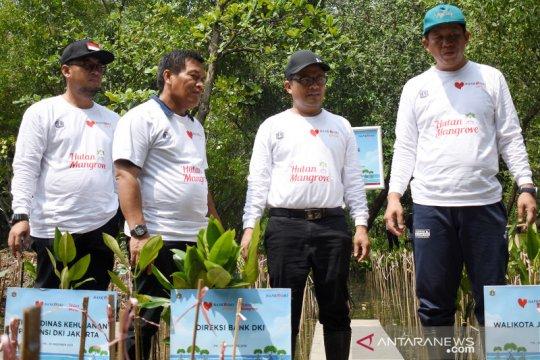 Bank DKI tanam 5000 pohon mangrove di Jakarta Utara