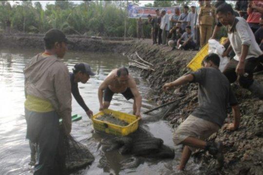 Panen perdana 10 ton udang vaneme di Kabupaten Lingga