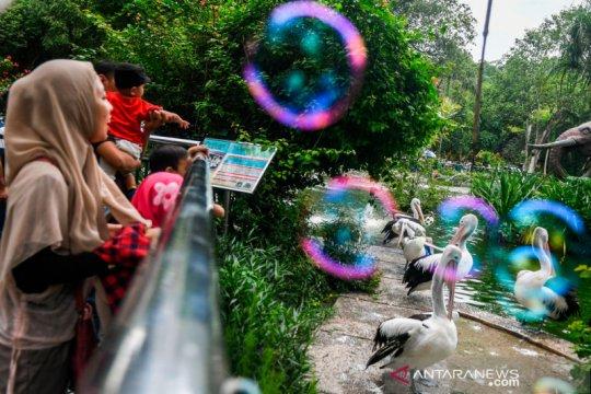 Libur Natal, Ragunan dipadati 54 ribu pengunjung