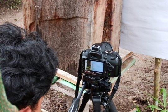 Peneliti Universitas Riau amati perilaku lebah saat gerhana matahari