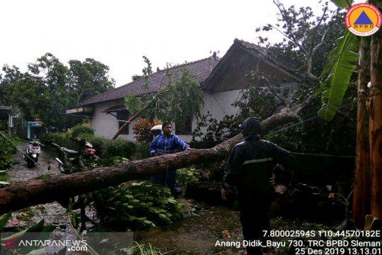 BNPB: Dua rumah di Jepara tertimpa pohon tumbang akibat hujan angin