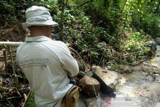 Serangan harimau di Muara Enim berjarak 100 meter dari pemukiman