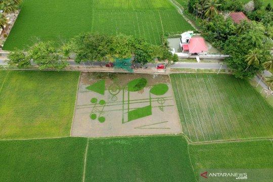 Inilah penampakan sawah berbentuk not balok di Gorontalo