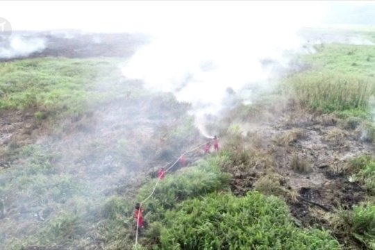 Sepanjang 2019 Karhutla di Sultra seluas 1.438 hektar