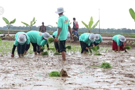 Kementan kembangkan pertanian modern berbasis korporasi di Pandeglang