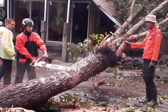 Puting beliung kembali menerjang Kabupaten Jember