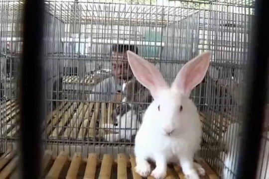 Libur Nataru permintaan daging kelinci di Magetan meningkat 300%