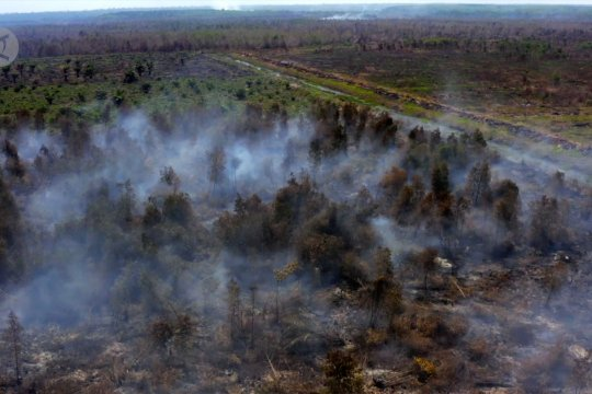 2019, Lahan terbakar seluas 942.485 hektare