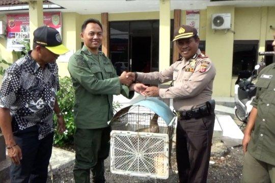 BKSDA Jawa Barat selamatkan sejumlah hewan dilindungi