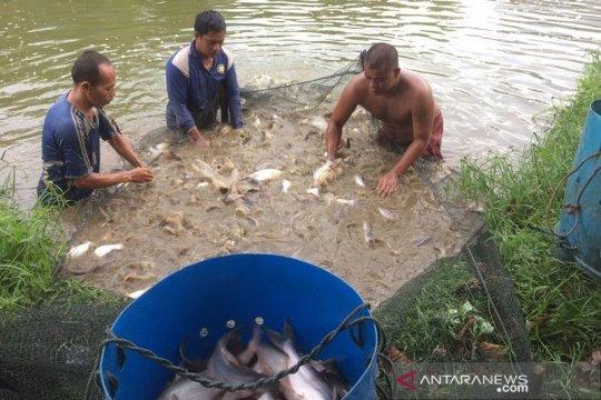 China tertarik ikan patin Riau
