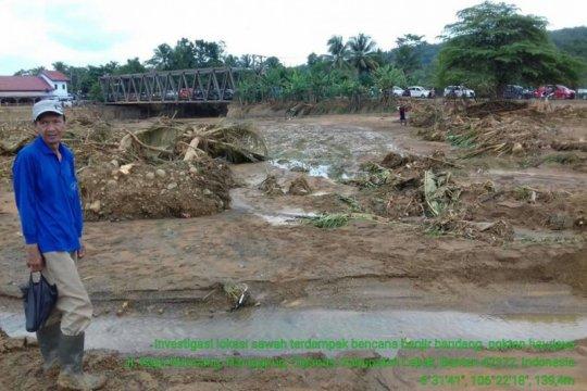 245 hektare sawah di Lebak terdampak banjir bandang