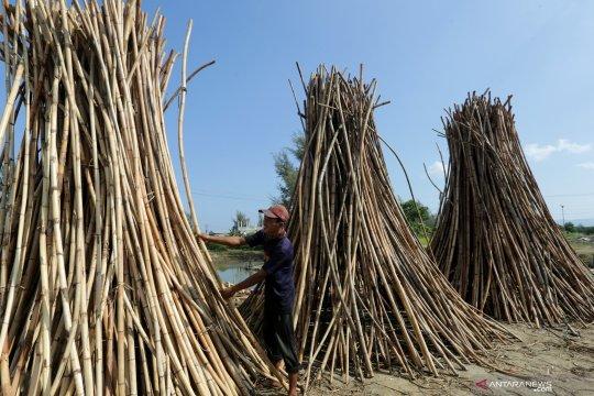 Pelaku usaha pemanfaat hasil hutan wajib lakukan budi daya rotan