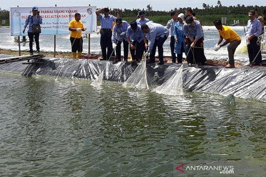 Menteri Kelautan dan Perikanan panen Udang Vaname di Mempawah