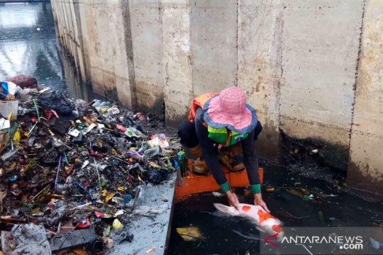 Ikan koi ditemukan saat bersih-bersih sampah sisa banjir