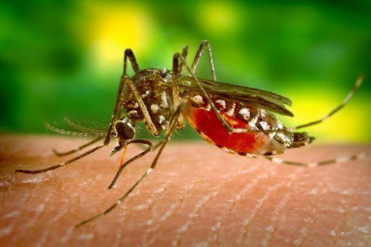 Musim hujan, waspadai demam dengue
