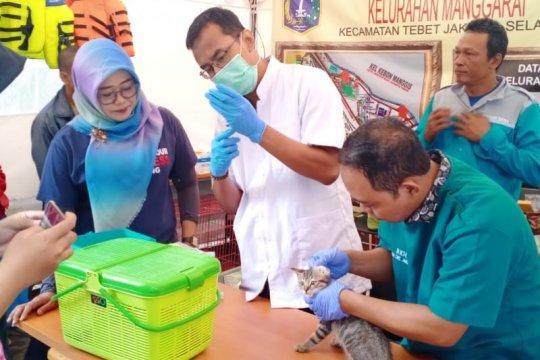 37 hewan terdampak banjir di Manggarai dapat layanan kesehatan gratis