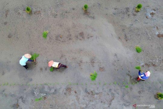 Kementan dukung pelibatan BUMN cetak lahan rawa untuk pertanian