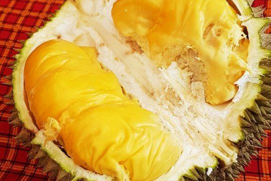 Pecinta durian : Kualitas durian Banjar bersaing dengan durian Asia