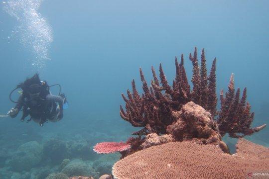 KKP dorong  program rehabilitasi terumbu karang