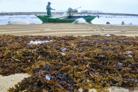 TII: Pengerahan nelayan Pantura berpotensi picu konflik horizontal