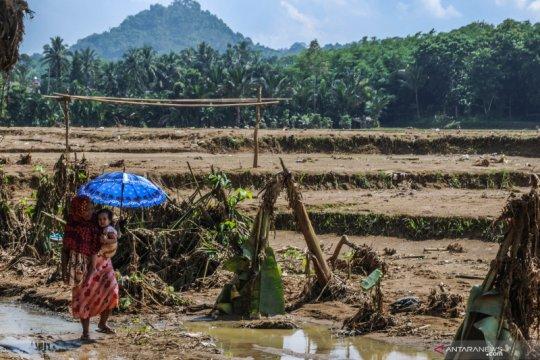Lahan padi rusak diterjang banjir bandang di Lebak