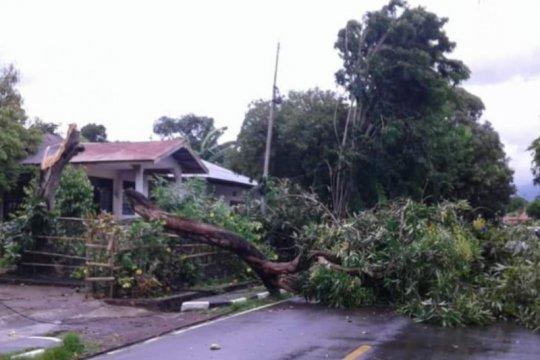 NTT alami 78 kali gangguan listrik karena pohon tumbang