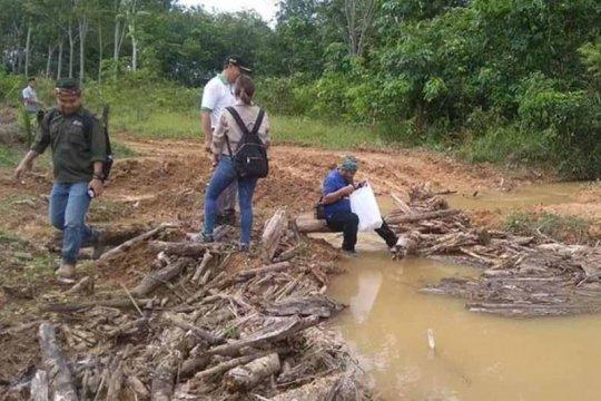 Pemkab Barito Timur beri sanksi perusahaan sawit rusak lingkungan