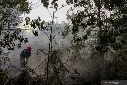 Enam kecamatan di Pekanbaru rawan kebakaran hutan-lahan