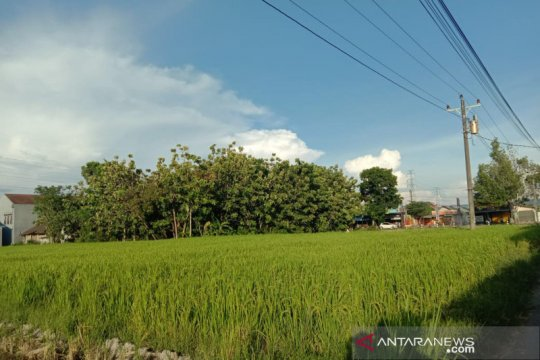 Musim tanam padi di Bantul mundur 3 bulan hingga Januari, ini sebabnya