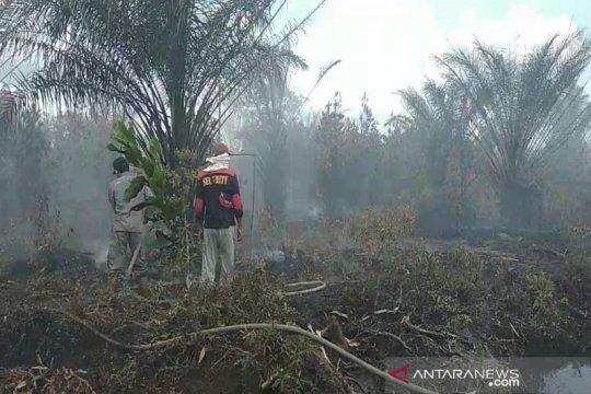 BBKSDA Riau tertibkan gubuk perambah di lokasi karhutla GSK