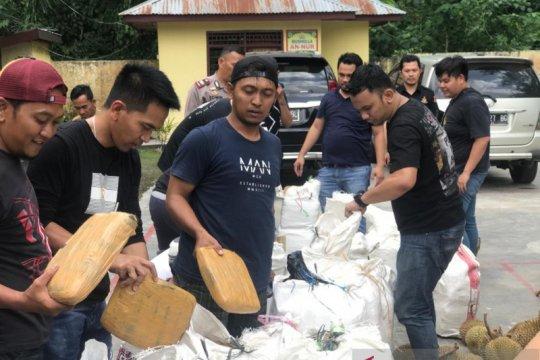 Ungkap peredaran ganja hingga ke Sumatera, tiga tersangka diamankan