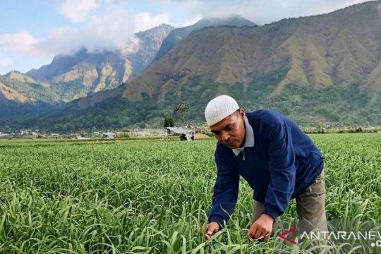 BNI kucurkan KUR Rp47,5 miliar untuk petani bawang putih di NTB