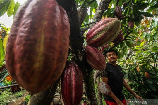 Kemendag sebut ada peluang tingkatkan ekspor buah ke Jepang