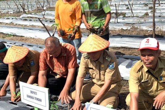 Pemkab Bangka Tengah Bangun Gudang Penyimpanan Cabai Merah