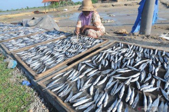 KKP dorong peningkatan mutu ikan sarden di forum internasional