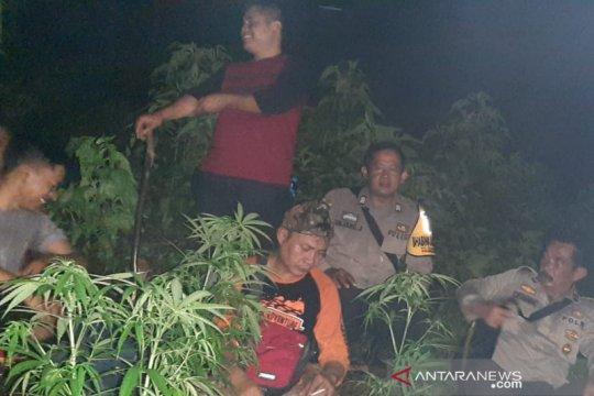 Polisi terus cari peladang ganja di Gunung Guntur