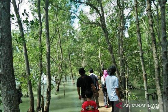 Wisata Mangrove, harapan baru warga pesisir Tanjungpunai