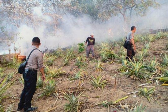 Puluhan hektar lahan hutan di Ambon terbakar