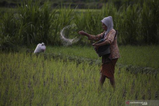 Mentan minta distribusi pupuk bersubsidi ke petani tidak terlambat