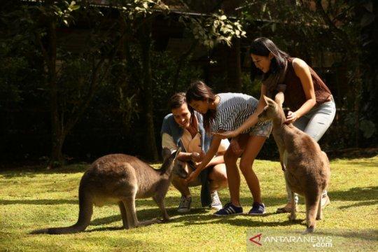 Taman Safari Bogor galang donasi untuk satwa terancam di Australia