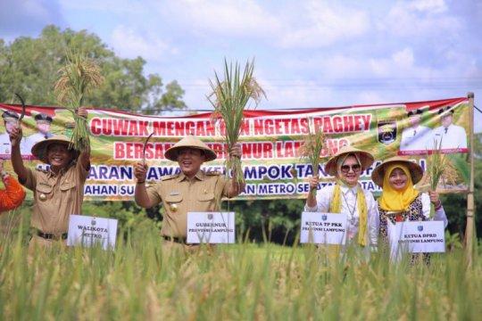 Gubernur Lampung apresiasi panen padi di Kota Metro capai 47.000 ton