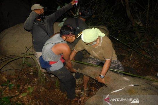 Anak gajah diselamatkan dari jerat di hutan tanaman industri Riau