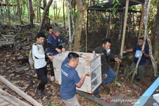 BKSDA evakuasi satwa dilindungi dari tempat wisata Barito Selatan