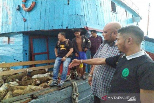 Sumut terus ekspor domba ke Malaysia