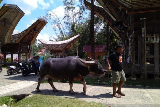 Dukung wisata halal, di Kete' Kesu Toraja kini ada masjid