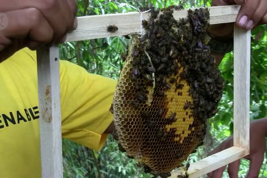 Tingkatkan produksi madu melalui sentuhan teknologi