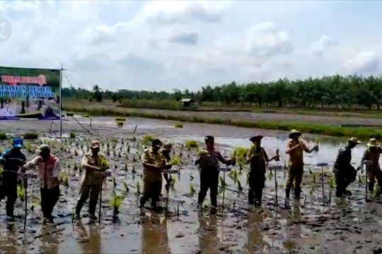 Kapuas targetkan 105.000 hektare tanam padi unggul
