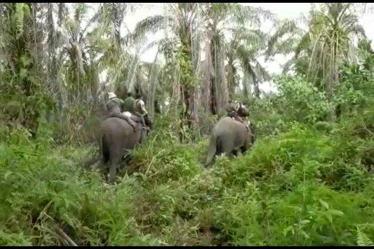 Cegah konflik dengan manusia, BBKSDA pasang GPS pada gajah liar