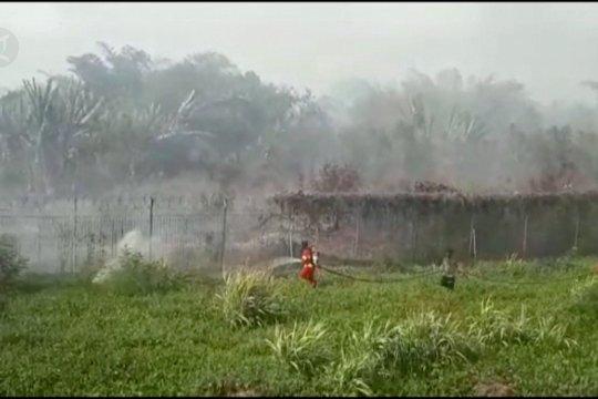 Lahan gambut di sekitar Bandara Halmahera Selatan terbakar