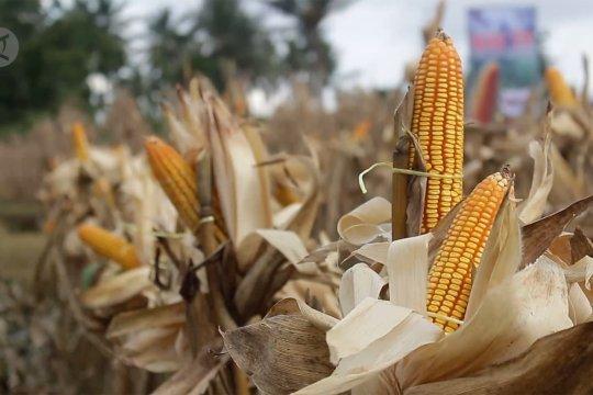 Ekspor komoditas pertanian Sumbar 2019 capai Rp4,049 triliun